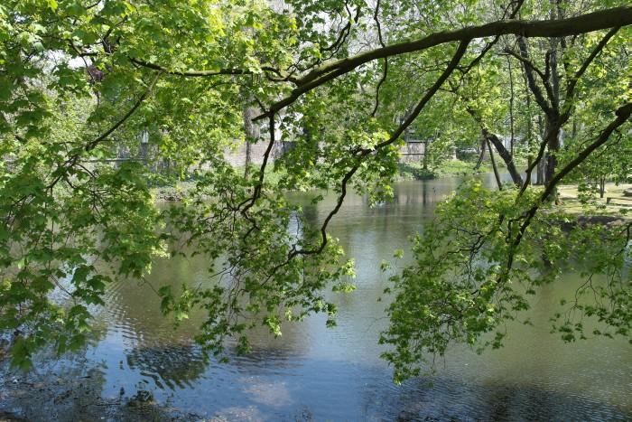 Düsseldorf Teich Baum