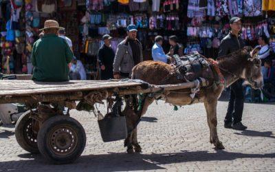 Trip nach Marrakesch: Herzlich willkommen in 1001 Nacht!